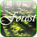 Forest Video Live Wallpaper icon