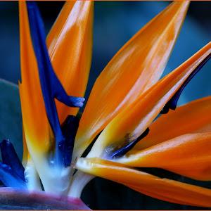 Flower1FM1.jpg.jpg
