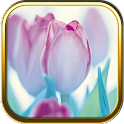 Free Purple Flower Puzzle Game icon
