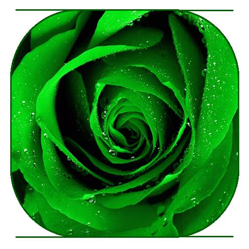 緑のバラの壁紙 個人化 App LOGO-硬是要APP