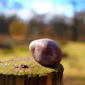 by Matt Gullick - Nature Up Close Rock & Stone (  )