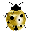 Good luck gold ladybird