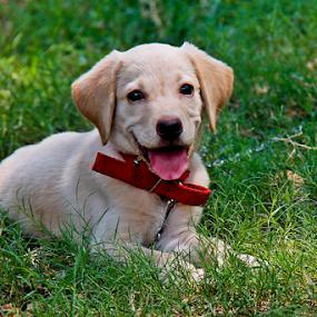 Give me some sun shine. by Debasish Naskar - Animals - Dogs Portraits