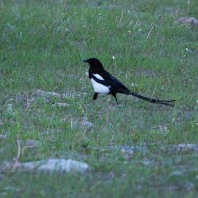 Bird by Thakkar Mj - Animals Birds ( bird, nature, grass, wings, animal,  )