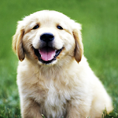 Dog Breeds for Dog Lovers