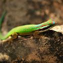 Réunion Island ornate day gecko