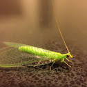 Green Lacewing