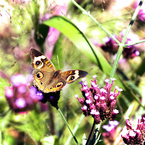 Butterfly by Christy Julian - Flowers Flowers in the Wild ( butterfly, nature, insect, garden, flower )