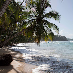 Caribbean Beach by Danielle Falknor - Landscapes Beaches ( costa rica, palm trees, palm shadows, porto viejo, ocean, caribbean beach )