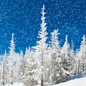 Snow Falling Live Wallpapers3 logo