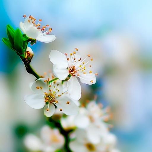 Spring HD wallpaper