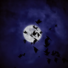 Nocturnal Flight by Helen Jamison - Digital Art Things ( epic, digital art, art, full moon, digital photography, digital, photography, ravens )