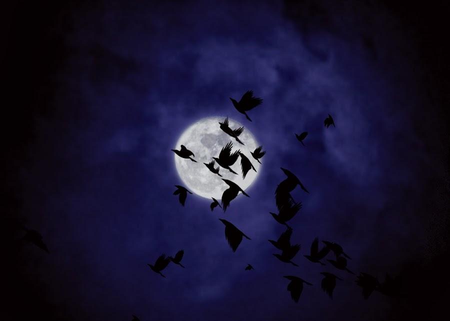 Nocturnal Flight by Helen Jamison - Digital Art Things ( epic, digital art, art, full moon, digital photography, digital, photography, ravens )