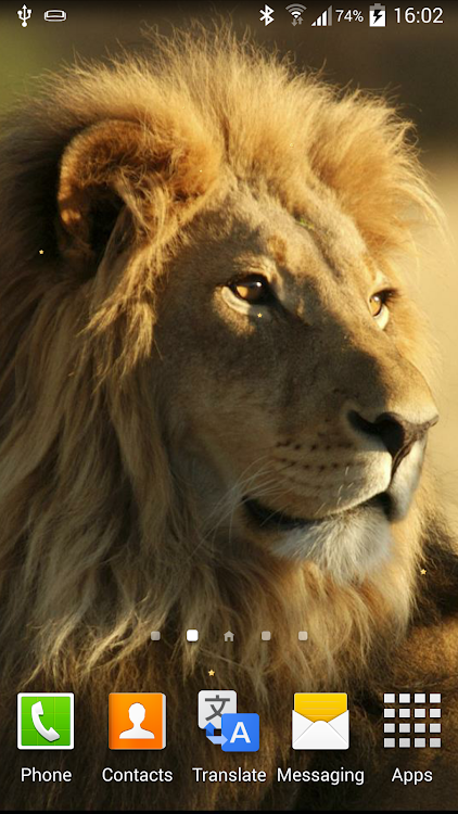 Lion Live Wallpaper Android Aplicaciones Appagg