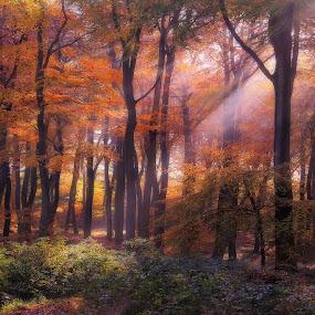 Golden Woodland Dawn by Ceri Jones - Landscapes Forests