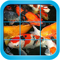 Fancy Koi Fish Puzzle Game icon