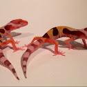 Leopard geckos (Bell albino mack snow HET high yellow juveniles).