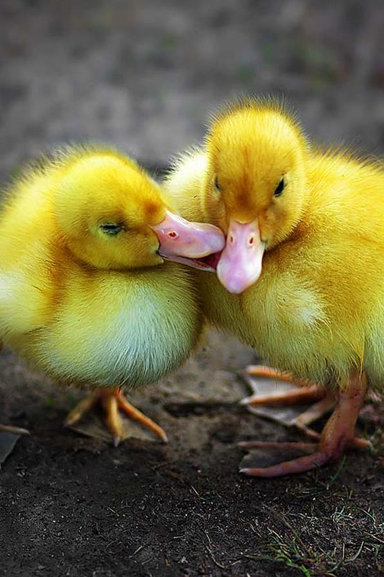 cute baby animals pictures   android apps on google play