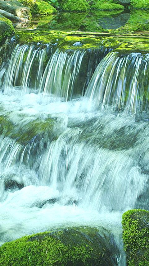 Green Stream HD Video Free- screenshot