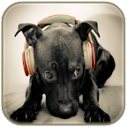 Funny animal ringtones