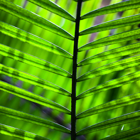 Sunlight through leaves by Danielle Falknor - Nature Up Close Leaves & Grasses ( fern plant, fern leaves, sunlight., tropical plants, forest, tropical paradise )