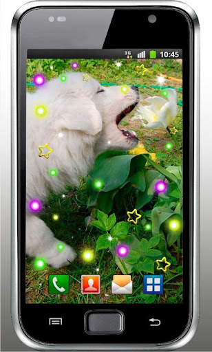 Dogs 2014 HD live wallpaper