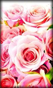 Roses Live Wallpaper 6uGPZGuuw0M_qCffehiI