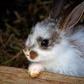 Cute bunny by Jony Ellis - Novices Only Pets ( rabbit, fluffy, bunny, adorable, cute )