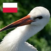 Polish Birds English Version