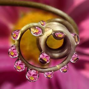 by Yustinus Slamet - Nature Up Close Natural Waterdrops