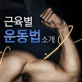 [건강]근육별운동법
