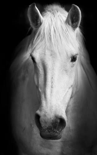 Horses Live Wallpaper 20.0 screenshots 2