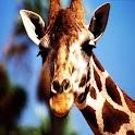 3D Giraffe logo