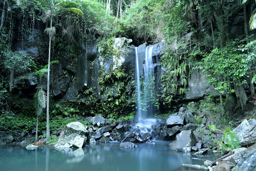 Curtis falls, Mt Tamborine by Adam McDonald - Nature Up Close Water