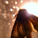 Fuzzy Moth
