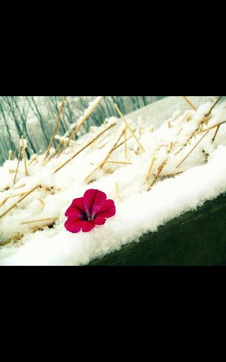 Snow Flowers live wallpaper