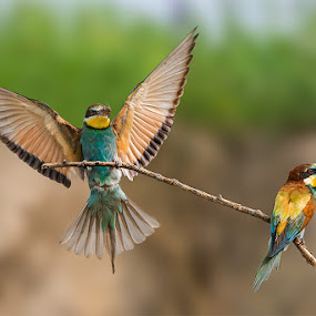 GRUCCIONI by Rigotti Jacopo - Animals Birds