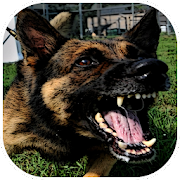 Dog Barking Sounds - Apps on Google Play on barking dogs quotes, barking dogs sounds, barking dogs cartoons,