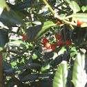 Tree w/ Red Berries