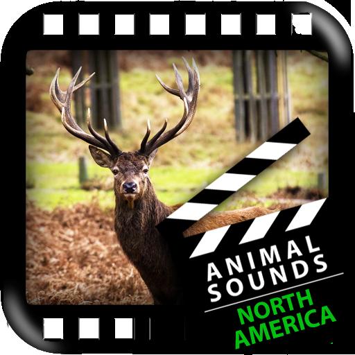 北美動物 音樂 LOGO-玩APPs