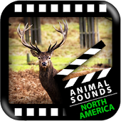 North American Animals Sounds