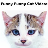 Funny Funny Cat Videos
