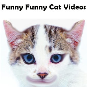 Funny Funny Cat Videos - Android Apps on Google Play Funny Videos Cats