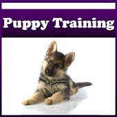 Puppy Training !