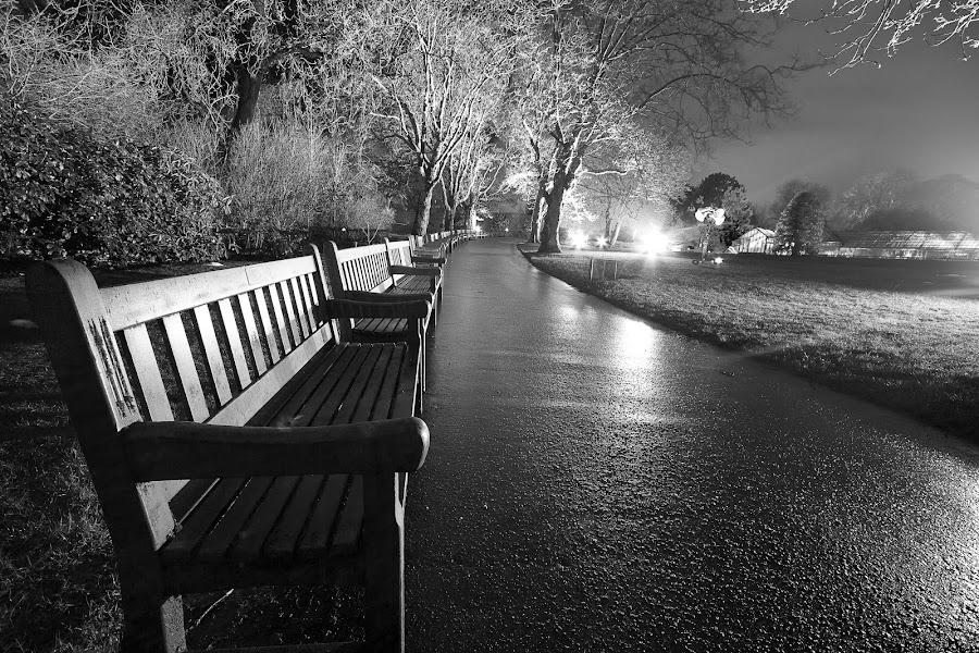 Glasgow Botanics during Light show by Wendy Milne - City,  Street & Park  City Parks ( glasgow )