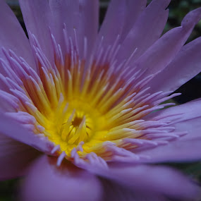 by Aniket Datar - Flowers Single Flower