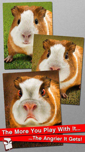 Angry Guinea Pig Free