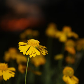 small town. by Massie Reep - Flowers Flowers in the Wild