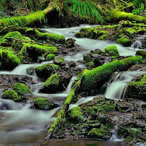 Spring flow! by Todd Ivanhoe - Landscapes Waterscapes ( renewal, green, trees, forests, nature, natural, scenic, relaxing, meditation, the mood factory, mood, emotions, jade, revive, inspirational, earthly )