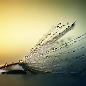 wet1.jpg